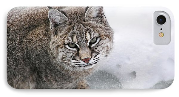 Close-up Bobcat Lynx On Snow Looking At Camera Phone Case by Sylvie Bouchard