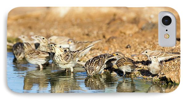 Corn Bunting Emberiza Calandra IPhone Case by Photostock-israel