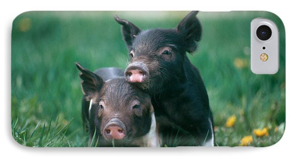 Domestic Piglets IPhone 7 Case by Alan Carey