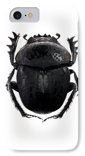 Dung Beetle IPhone Case by F. Martinez Clavel
