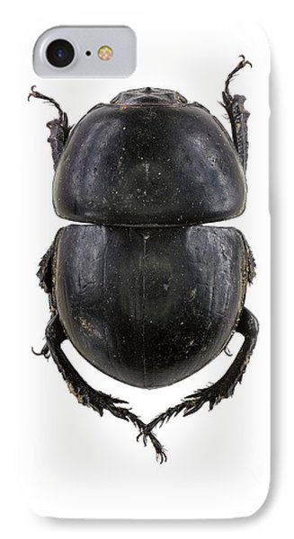 Earth-boring Dung Beetle IPhone Case by F. Martinez Clavel