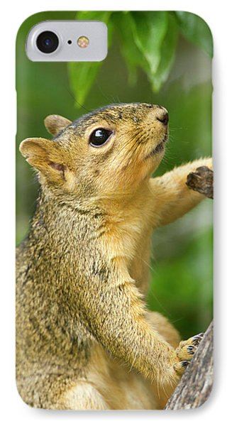 Eastern Fox Squirrel (sciurus Niger IPhone Case by Larry Ditto