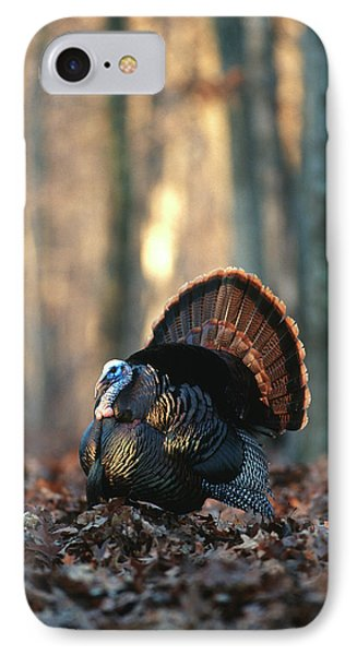 Eastern Wild Turkey (meleagris IPhone Case by Richard and Susan Day