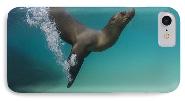 Galapagos Sea Lion Swimming Ecuador IPhone Case by Pete Oxford