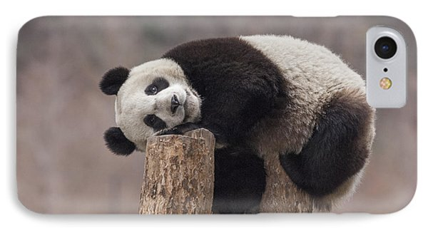 Giant Panda Cub Wolong National Nature IPhone 7 Case by Katherine Feng