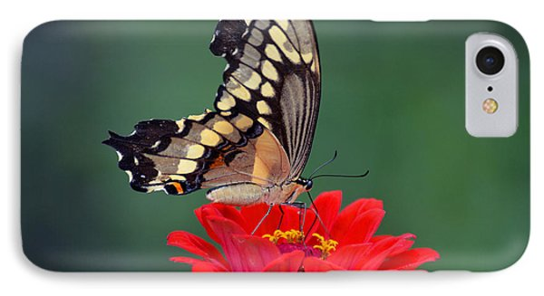 IPhone Case featuring the photograph Giant Swallowtail by Rodney Campbell