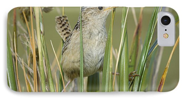 Grass Wren IPhone Case by John Shaw