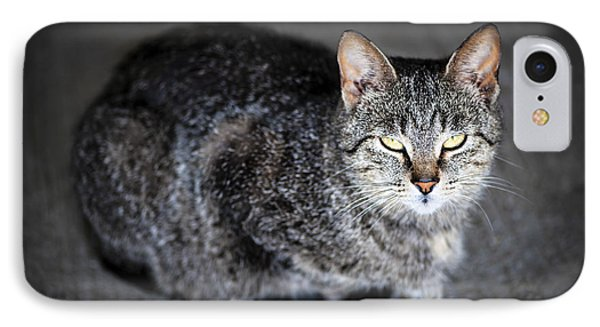 Grey Cat Portrait IPhone Case by Elena Elisseeva