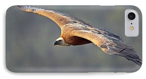 Griffon Vulture In Flight IPhone 7 Case by Bildagentur-online/mcphoto-schaef