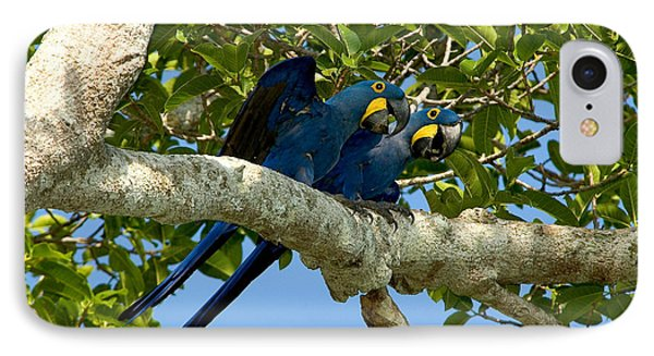 Hyacinth Macaws, Brazil IPhone 7 Case by Gregory G. Dimijian, M.D.