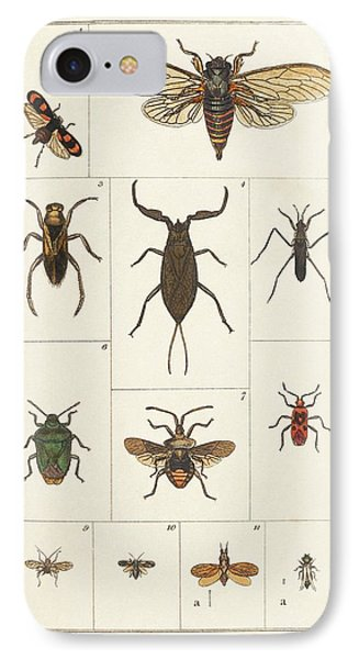 Insects IPhone Case by King's College London