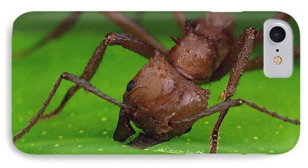 Leafcutter Ant Cutting Papaya Leaf IPhone Case by Mark Moffett