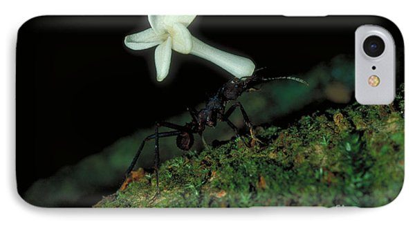 Leafcutter Ant IPhone Case by Gregory G. Dimijian
