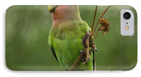 Lovely Little Lovebird  IPhone Case by Saija  Lehtonen