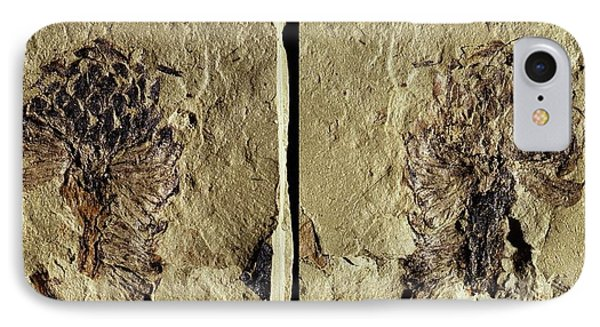 Male Conifer Cone Fossil IPhone Case by Gilles Mermet