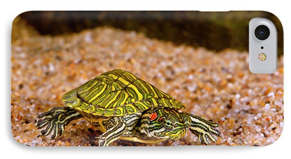 Ornate Red Ear Turtle, Chrysemys IPhone Case by David Northcott