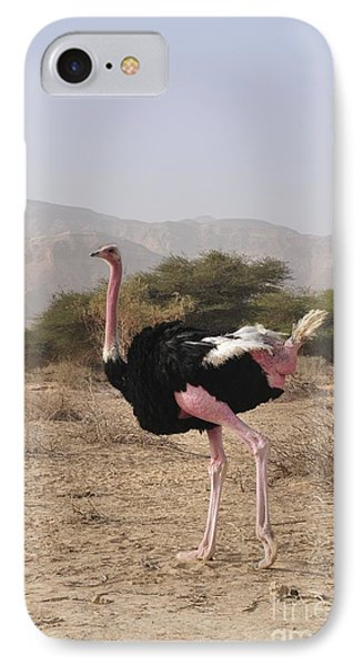 Ostrich In A Nature Reserve IPhone Case by PhotoStock-Israel