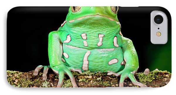 Painted Monkey Frog, Phyllomedusa IPhone Case by David Northcott