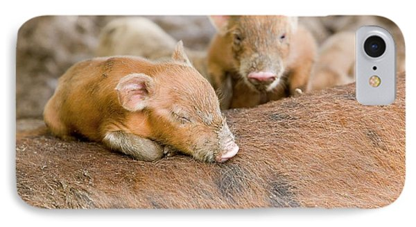 Pigs Reared For Pork On Tuvalu IPhone 7 Case by Ashley Cooper