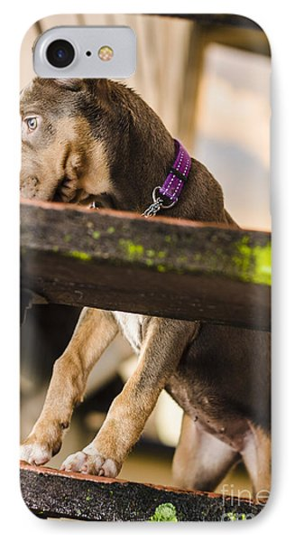Puppy Dog Walking Up Stairs In A Garden Backyard IPhone Case by Jorgo Photography - Wall Art Gallery
