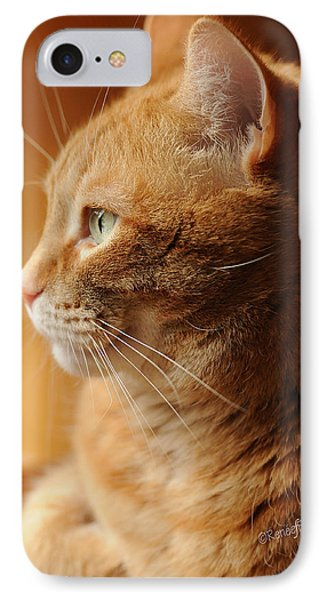 Red Tabby Cat IPhone Case by Renee Forth-Fukumoto