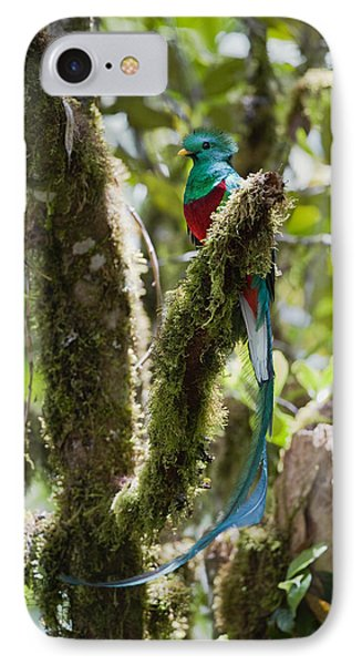 Resplendent Quetzal Male Costa Rica IPhone Case by Konrad Wothe