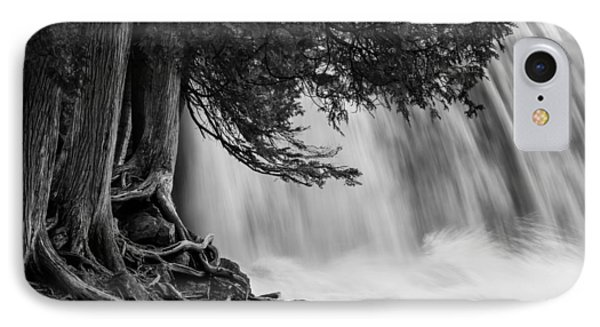 Rooted In Spring  IPhone Case by Mary Amerman