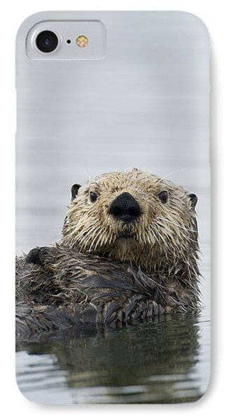 Sea Otter Alaska IPhone Case by Michael Quinton