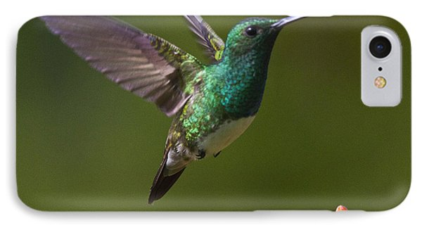 Snowy-bellied Hummingbird IPhone 7 Case by Heiko Koehrer-Wagner