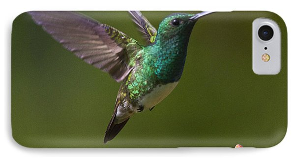 Snowy-bellied Hummingbird IPhone Case by Heiko Koehrer-Wagner