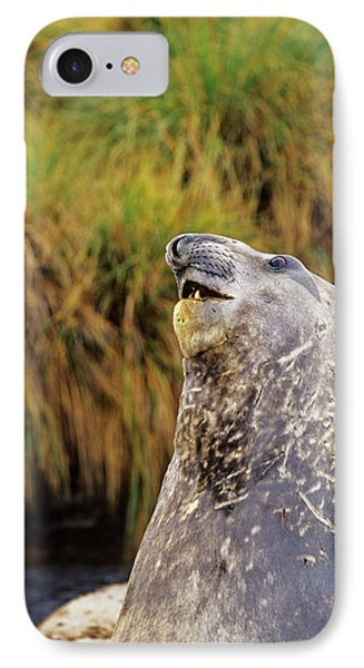 Southern Elephant Seal Bulls In Mock IPhone Case by Martin Zwick