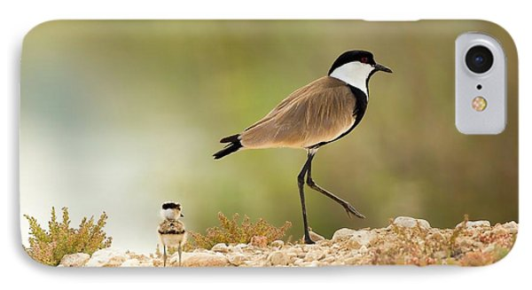 Spur-winged Lapwing Vanellus Spinosus IPhone 7 Case by Photostock-israel