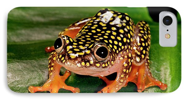 Starry Night Reed Frog, Heterixalus IPhone Case by David Northcott