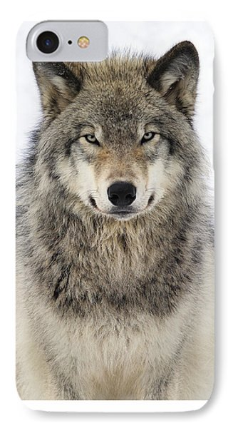 Timber Wolf Portrait IPhone Case by Tony Beck