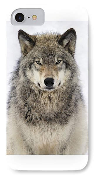 Timber Wolf Portrait IPhone 7 Case by Tony Beck