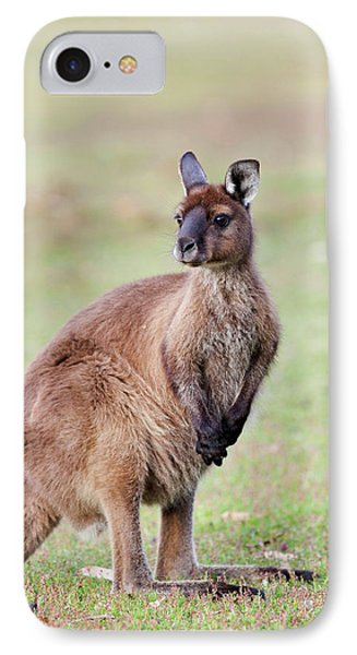 Western Grey Kangaroo (macropus IPhone 7 Case by Martin Zwick