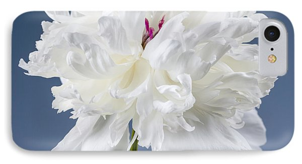 White Peony Flower IPhone Case by Elena Elisseeva