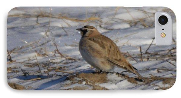 Winter Bird IPhone Case by Jeff Swan