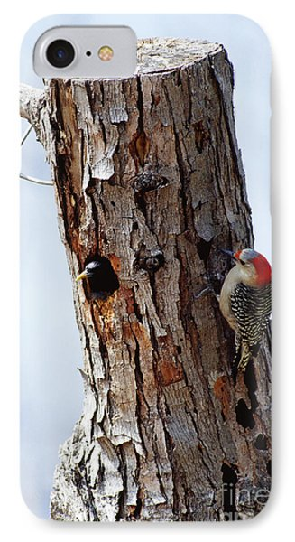 Woodpecker And Starling Fight For Nest IPhone 7 Case by Gregory G. Dimijian