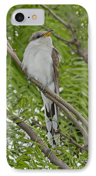 Yellow-billed Cuckoo IPhone Case by Anthony Mercieca