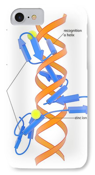 Zinc Finger Dna-binding Domain IPhone Case by Science Photo Library
