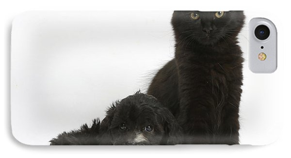 Kitten And Puppy IPhone Case by Mark Taylor
