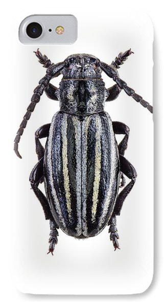 Longhorn Beetle IPhone Case by F. Martinez Clavel