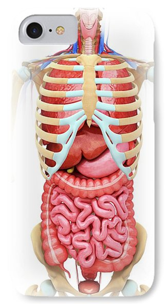 Human Digestive System IPhone Case by Pixologicstudio