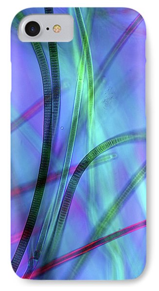 Oscillatoria Cyanobacteria IPhone Case by Marek Mis