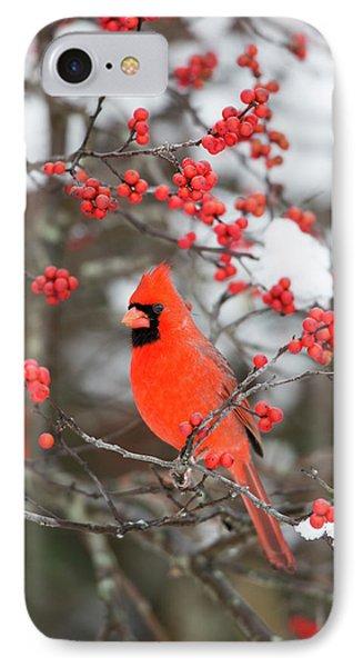 Northern Cardinal (cardinalis Cardinalis IPhone Case by Richard and Susan Day