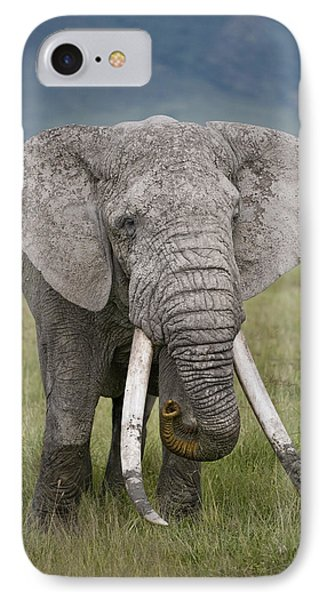 African Elephant Loxodonta Africana IPhone Case by Panoramic Images