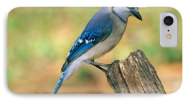 Blue Jay IPhone 7 Case by Millard H. Sharp