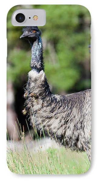 Emu (dromaius Novaehollandiae IPhone Case by Martin Zwick