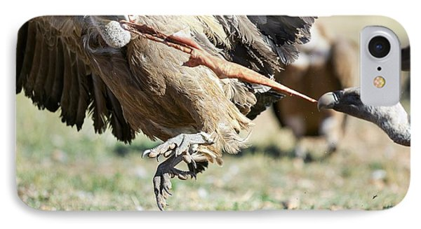 Griffon Vultures Feeding IPhone Case by Nicolas Reusens